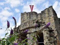 Blumen auf der Burg
